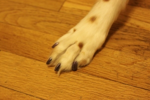 Ginger's Pedicure