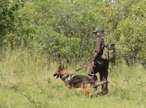 Rangers and Rhino dogs protect rhinos