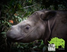 Team Rhino for World Rhino Day