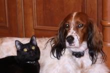 Christmas Pets 2011 001