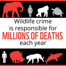 Stop Wildlife Crime