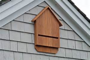 hang a bat house to protect bats