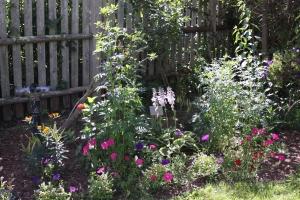 Butterfly garden in progress